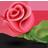 redrose.png