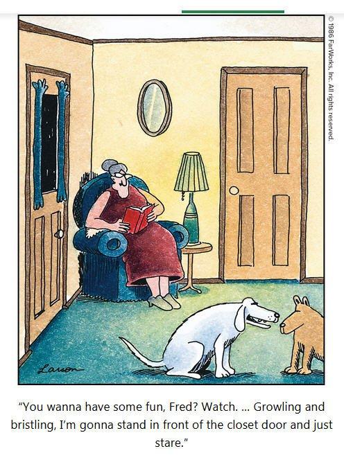 Dogs_Closet.jpg